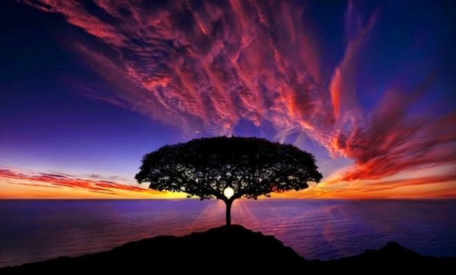 gambar-pohon-cantik-pemandangan-alam-indah-wallpapers